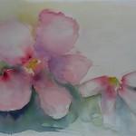 Blomster6